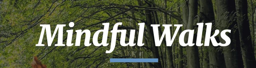 Mindful Walks - Forest Bathing Walks