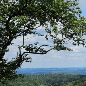 Forest Bathing+ Experience - Mindfulness in Nature at Newlands Corner