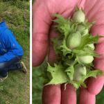 Foraging walk for beginners