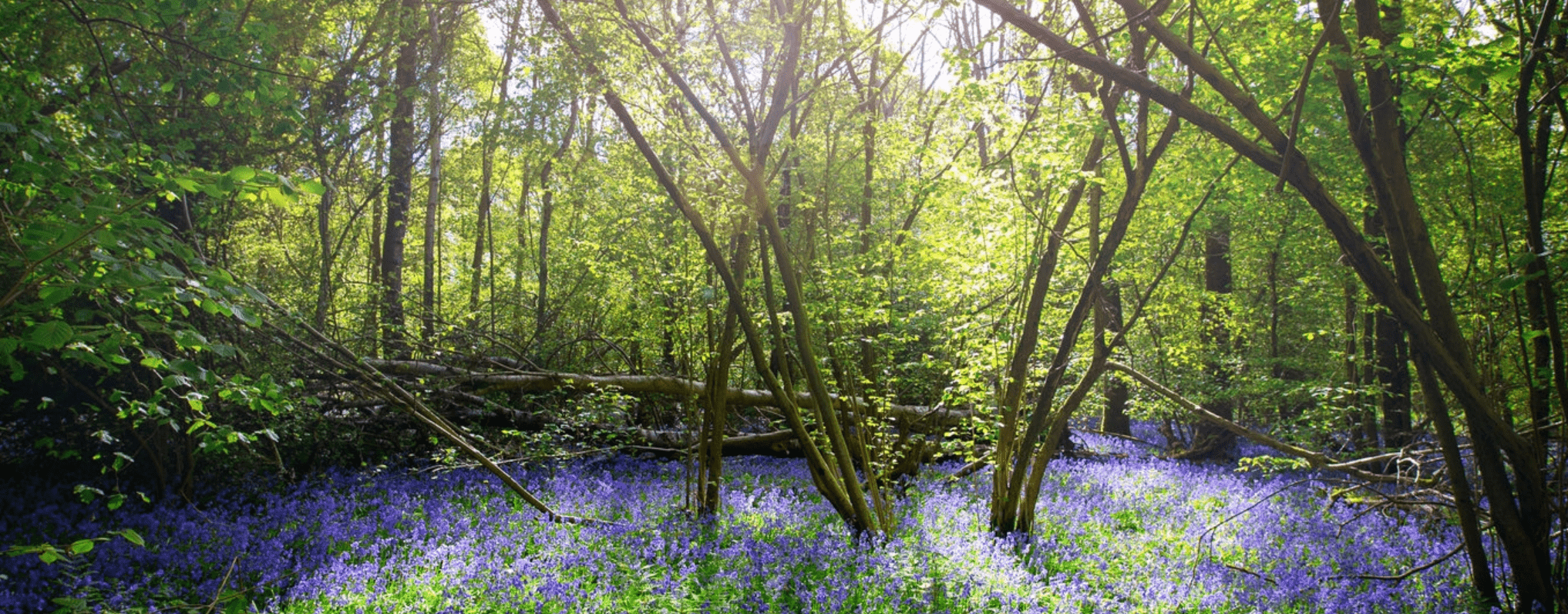 Forest Bathing - immerse yourself in nature
