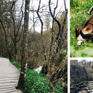 Hike World Heritage Reserve Waterfalls